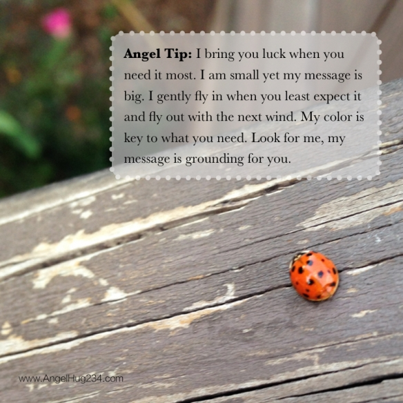 angel messages in ladybugs
