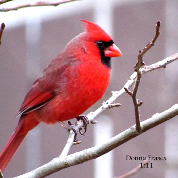 cardinal-1-11-2